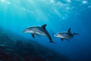 قیمت چسب دلفین 110